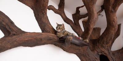 Fake indoor treehouse created by artist for cat