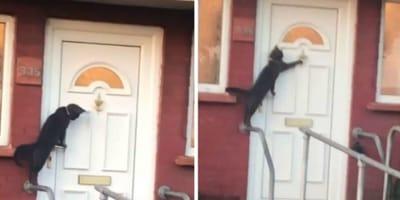 gatto-nero-bussa-a-porta-bianca