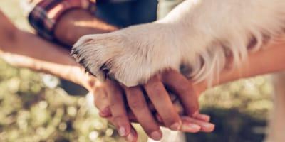 razones adopción perro