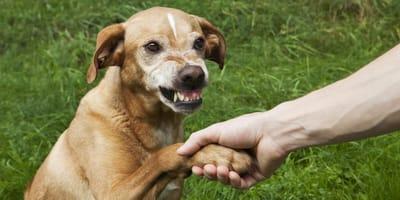 como saber si tu perro te odia