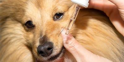 administrar vitaminas para perros