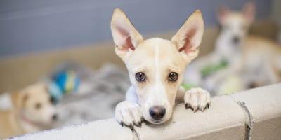 primer dia perro adoptado
