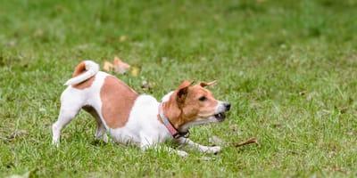 Cómo educar a perros nerviosos