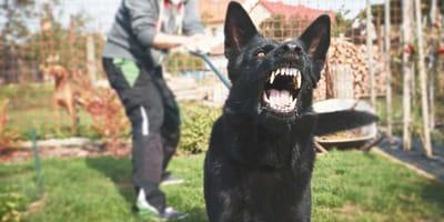 Como quitar la agresividad en perros