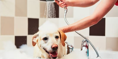 When should you wash your dog?