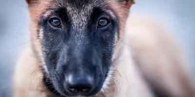 Como quitarle el miedo a un perro maltratado