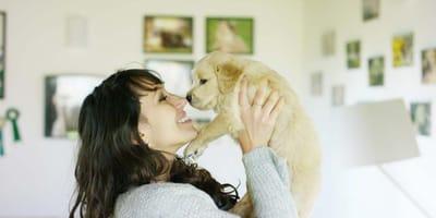 Curar las heridas de los perros