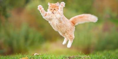 kot biega jak szalony