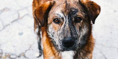 perro cuando es adoptado