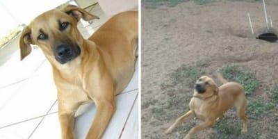 Nie uwierzycie, co ten pies wykopał w przydomowym ogródku!