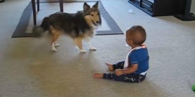 Un niño y su perro