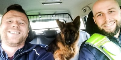Co robi policjant, kiedy znajdzie bezdomnego psa? Będziecie zaskoczeni