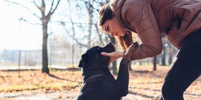 trucos educar perro adoptado