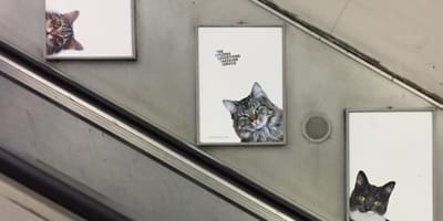 Clapham Common Tube station filled with pictures of cats