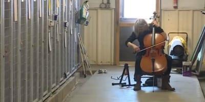 donna suona violoncello per gli animali