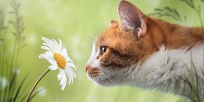 Jak działa koci węch?
