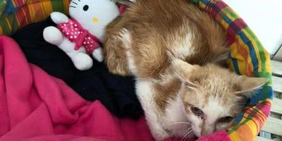 gatto in una cesta