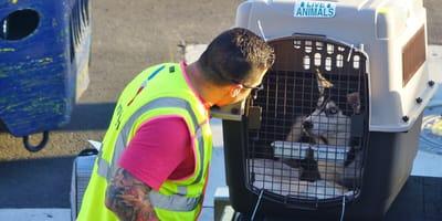 Frau gibt Hund am Flughafen ab. Nach der Landung erlebt sie ihr blaues Wunder!