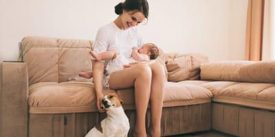 mamma, bambino e cane su divano