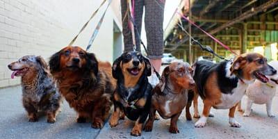Hundesteuer in Nürnberg