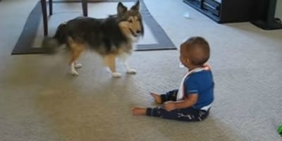Mama mit Tränen in den Augen, als sie sieht, was der Hund mit dem Baby treibt