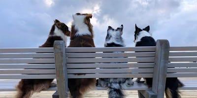 Sankt Peter-Ording: Frische Luft für Hund und Herrchen