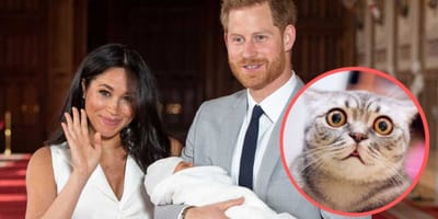 Królewski potomek otrzymał imię po ... kocie?