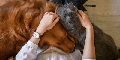 Kot i pies pod jednym dachem – jak je pogodzić?