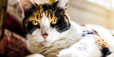 Tips for your elderly cat