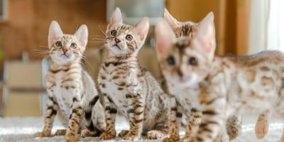 3 tips to house train your kitten