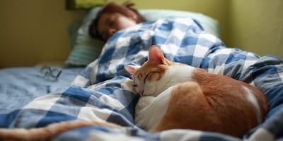 Deshalb kommt die Katze so gerne zu uns ins Bett