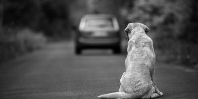 razones devolver perro adoptado