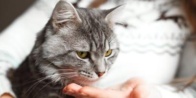 Aspirin und Paracetamol: Medikamente für Menschen sind nichts für Katzen!