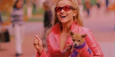 5 Fun Facts to Celebrate Chihuahua Appreciation Day!