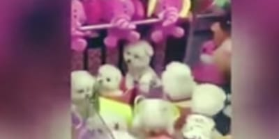 This arcade offered pets as prizes