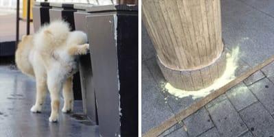 azufre perros orina calle