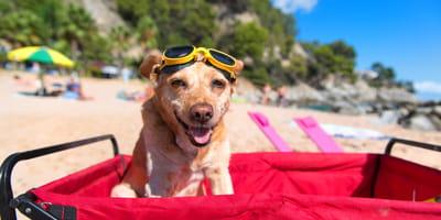 Carritos para perros: la moda de los cochecitos para paseos seguros