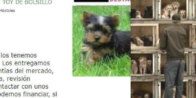 anuncio de milanuncios animales en venta