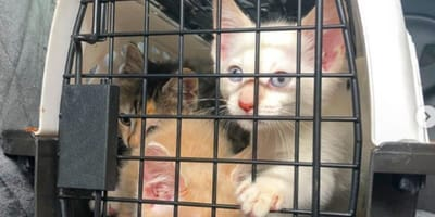 Mum did everything she could to keep the kittens safe