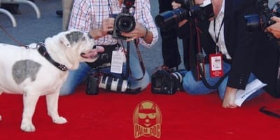 Festiwal Filmowy w Cannes. Kto zgarnie statuetkę dla najlepszego psiego aktora?