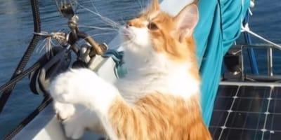 gatto rosso su una barca