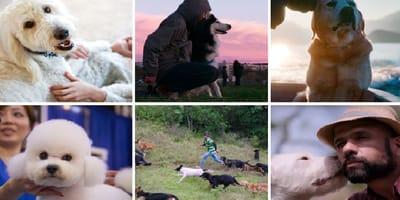'Amigos caninos', el documental de Netflix sobre perros que te atrapa el corazón