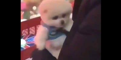 Il gioco shock in Cina che usa i cani come premi (Video)