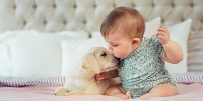 Cómo presentarle tu bebé a tu perro