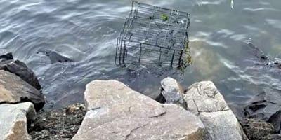 Lo que encontró en esta jaula sumergida en el mar cambió su forma de ver vida