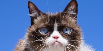 Grumpy cat su sfondo azzurro
