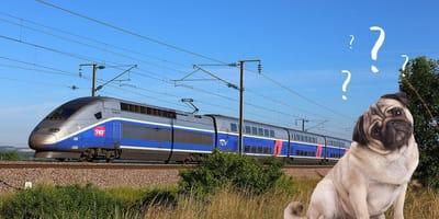 Hund und TGV-Zug