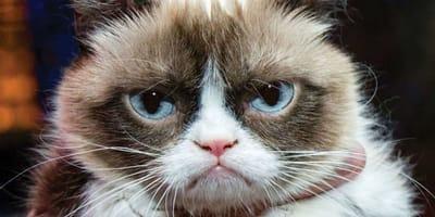 Grumpy_cat_oczy