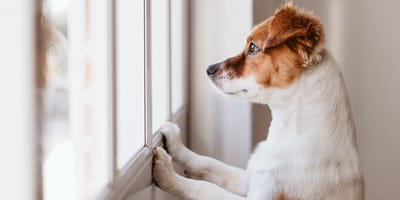 perro experto observador lenguaje humano
