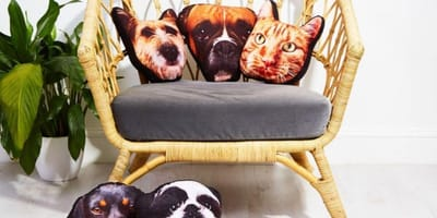 Picture of dog prints on fabric cushions